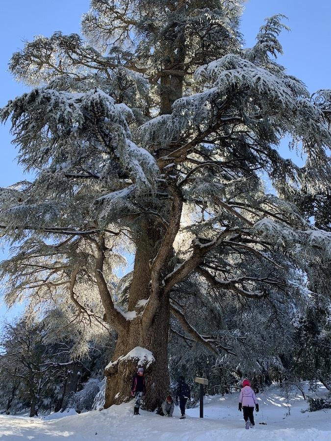 Giant Cedar forest, Azrou, Morocco - Blog - Dreaming of Benis